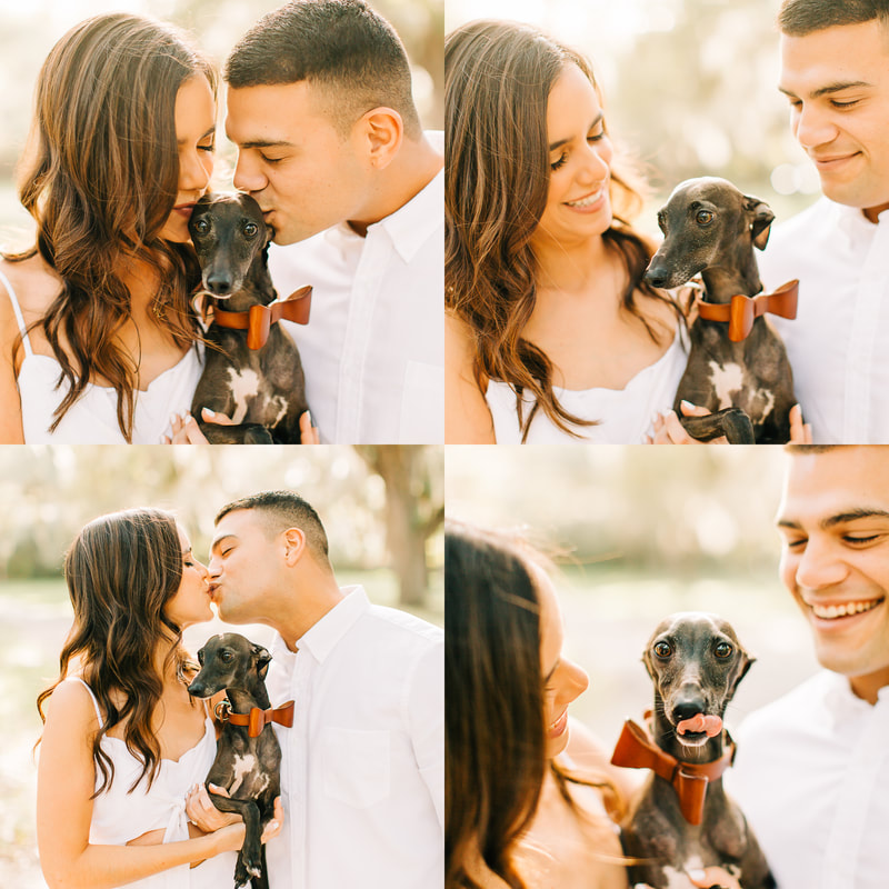How to include your dog on your wedding day, how to include your dog in wedding photos, dog engagement photos